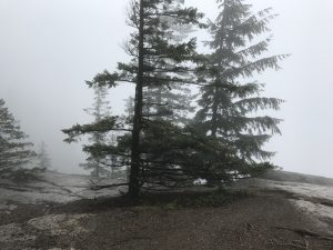 View at the Oyster Dome summit