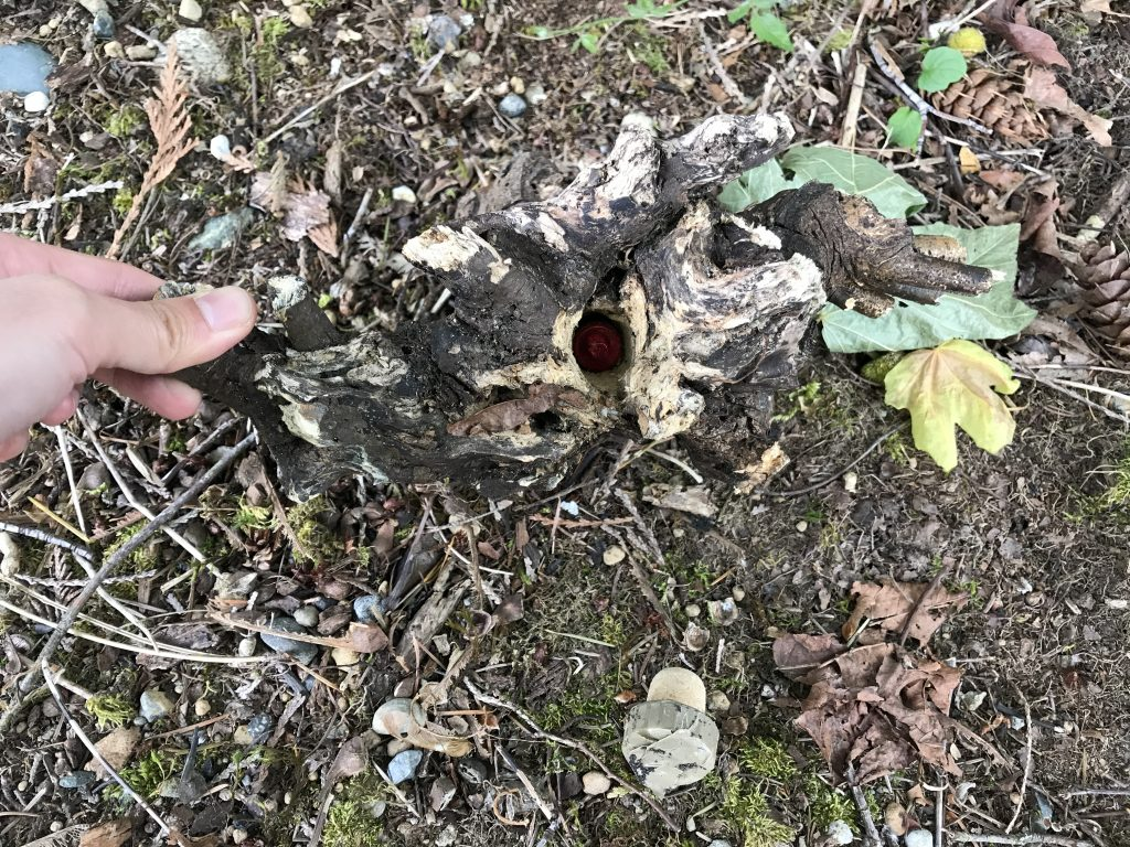 Bison geocache inside the piece of wood