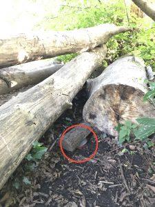 Geocache under a log