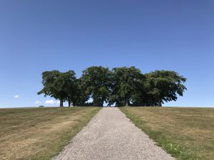 the meditation grove