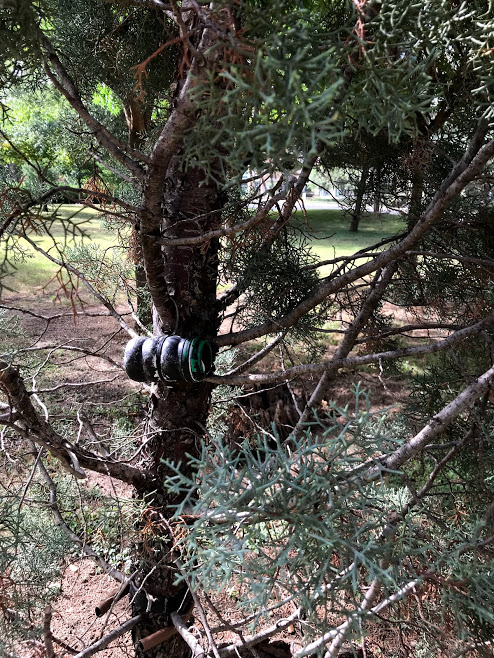Geocache in a tree